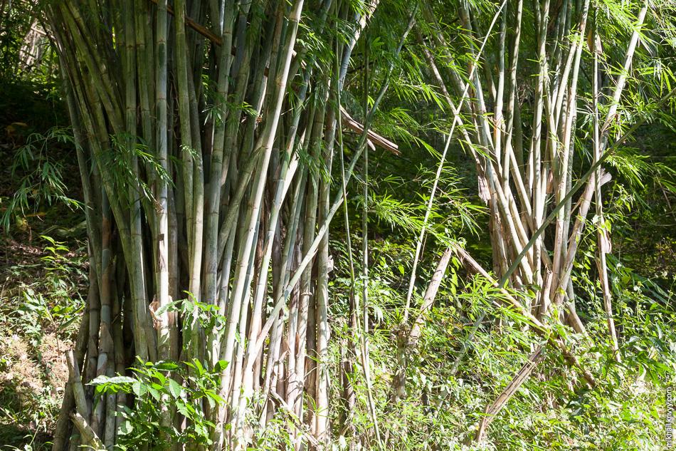 И еще бамбук.