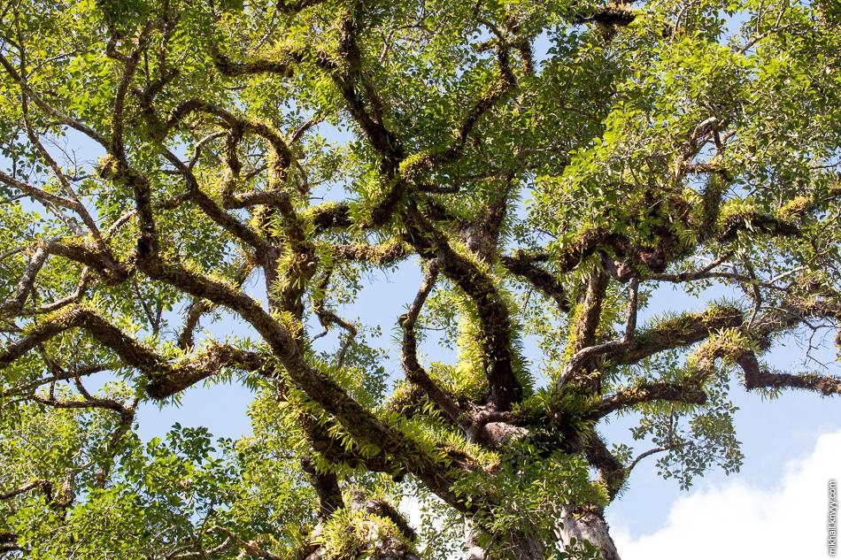 На верхнем ярусе. Высота деревьев впечатляет.