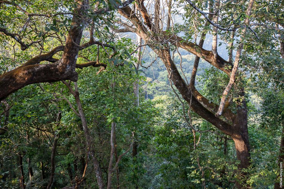 Сразу за храмом начинаются настоящие джунгли.