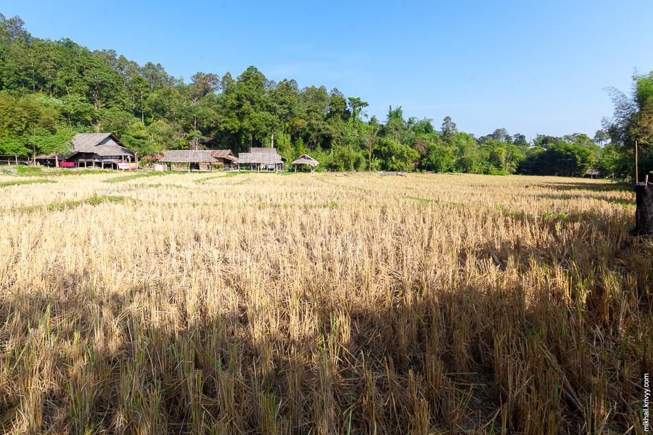 Рисовые поля в деревне Ban Tong Luang.
