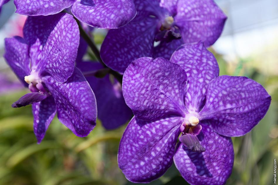 После рисовых полей нас повезли на орхидейные плантации.