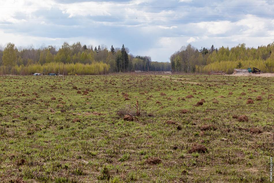 Просека в сторону Санкт-Петербурга. Судя по размерам, лес рубить начали совсем недавно.