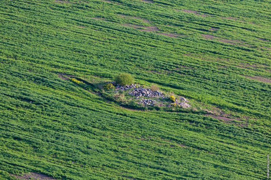 С сельским хозяйством в старорусском районе дела обстоят намного лучше чем в других районах новгородской области. Глаз уже отвык от вспаханных полей.