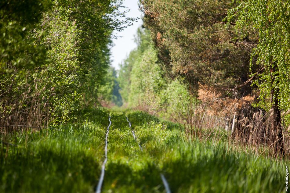Надо будет сюда приехать весной, когда листьев не будет. Со спутника вроде торфяные карты с водой, а по факту вокруг виден только лес невысоких деревьев.