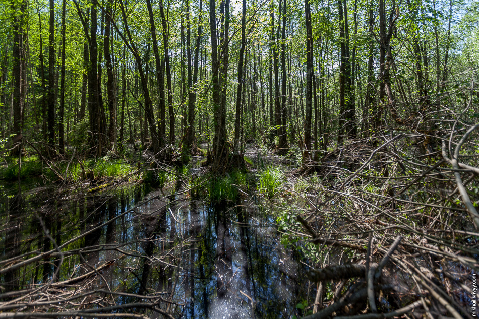 В этих краях даже лес больше похож на мангровые заросли. И это еще сухая весна.