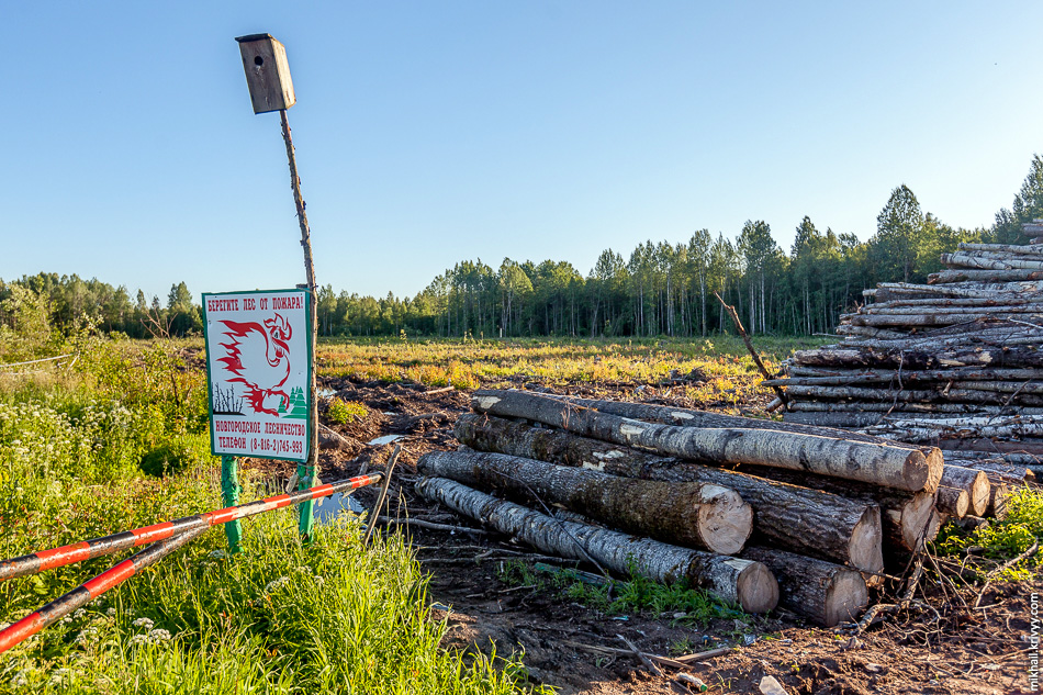 Старый плакат от новгородского лесничества. Отлично смотрится на фоне вырубленного леса.