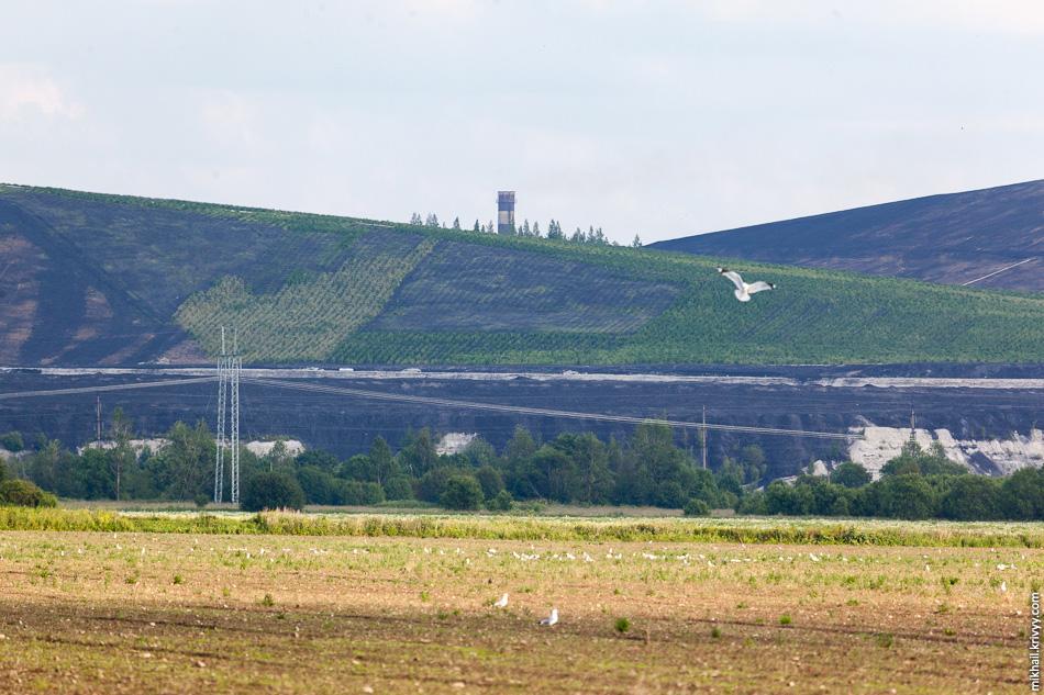 Отвалы золы у эстонской сланцевой электростанции начали чем-то засаживать. Сжигаемые в Нарве сланцы имеют на выходе до 46 % золы.