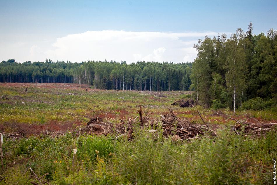 В сторону Санкт-Петербурга частично расчищена площадка под транспортную развязку. Лес вырублен и вывезен. Пни не выкорчеваны.