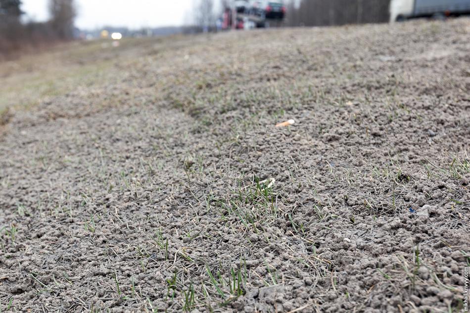 Бедный газончик присыпан вот такими шариками. Что это? Судя по всему, это особенности работы реагентов, которыми поливали М10 зимой. Все обочины усыпаны такими образованиями.