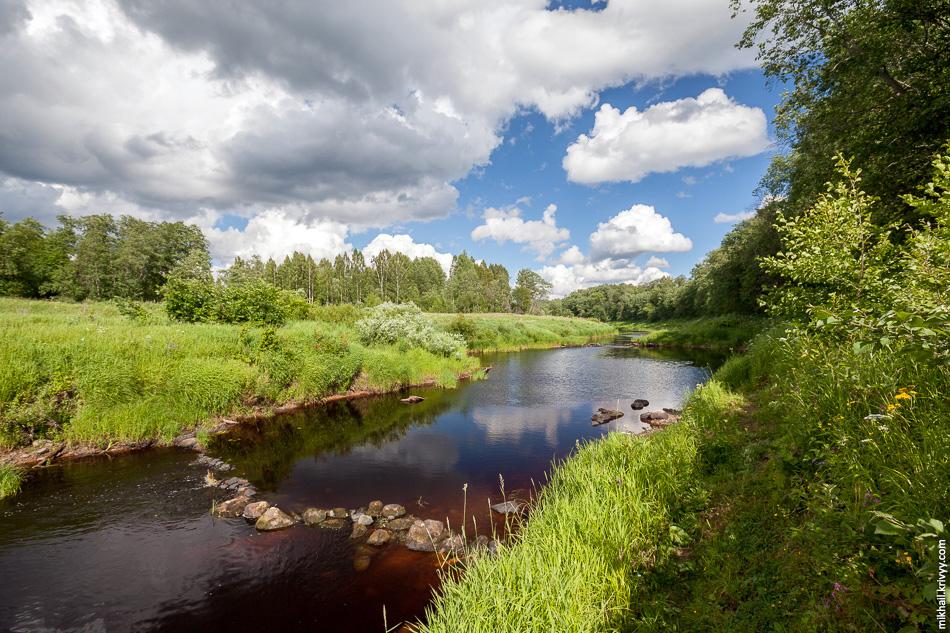 Хотел дойти до моста через реку Вишера, но не рискнул с ребенком пробираться напролом. Весной там вполне можно пройти, но летом все зарастает.