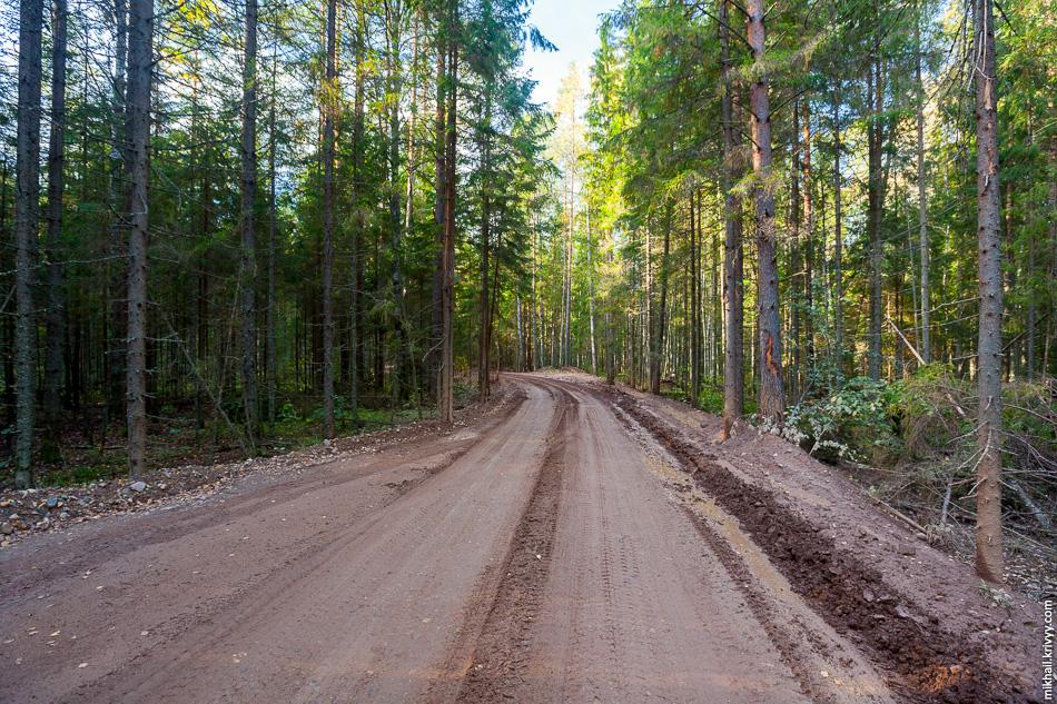 Служебная дорога от деревни Усть-Волма до строительства М11. Проехал по ней около 6 км и дальше не рискнул. Прошли дожди и самосвалы вмиг накатали колею.