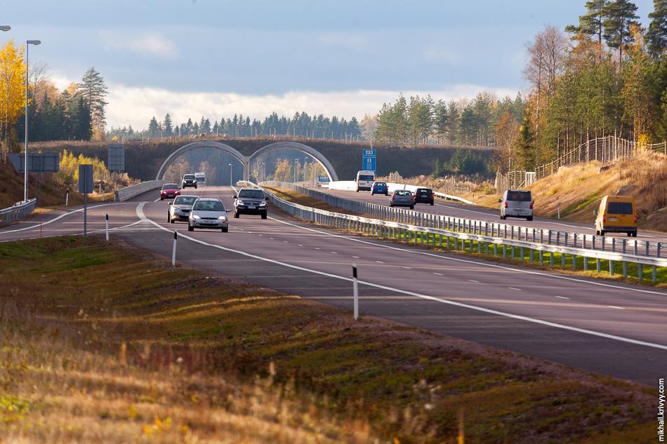 Переход для диких животных. На новом участке их 6 штук. В отличии от М11, где зверопроходы обустроены под автомагистралью , здесь применено проверенное типовое решение.