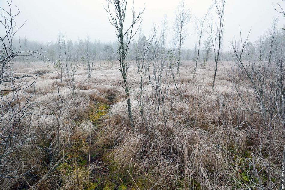 3. Еще одно болото в том же районе. Провалился немного.
