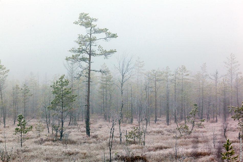 1. Небольшое болото между деревнями Папоротно и Гряды. Маловишерский район.