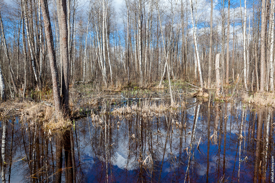 5. Вот так выглядит лес в этих краях весной. Строителям крупно повезло, у нас вторая сухая весна подряд. Это большая редкость.