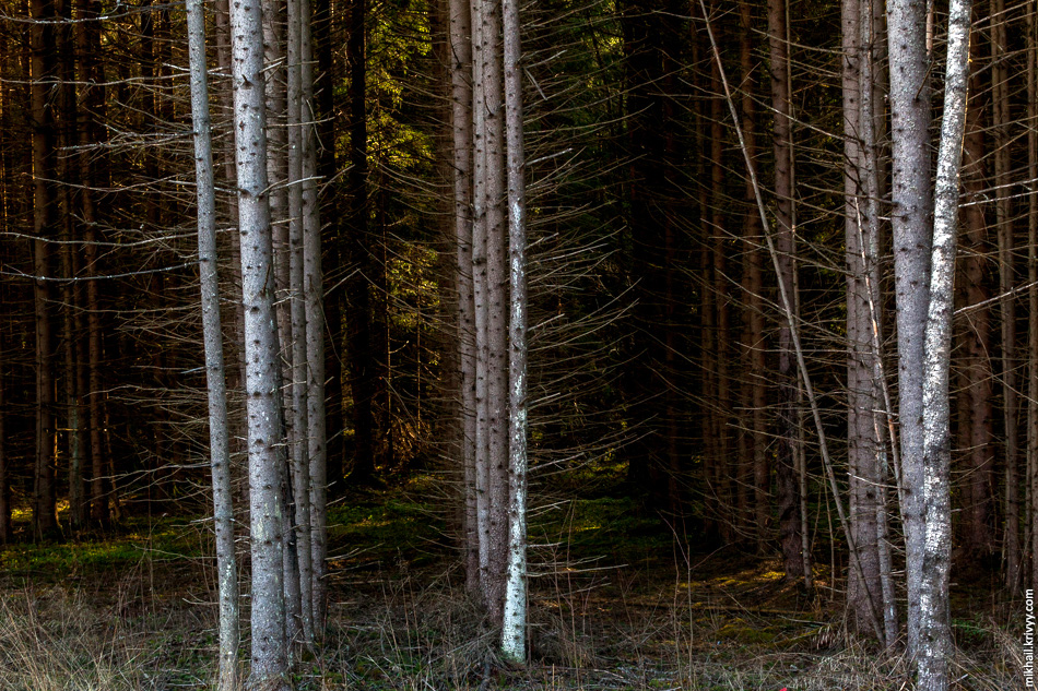 8. Удивительно, но в этих краях есть участки высаженного леса.