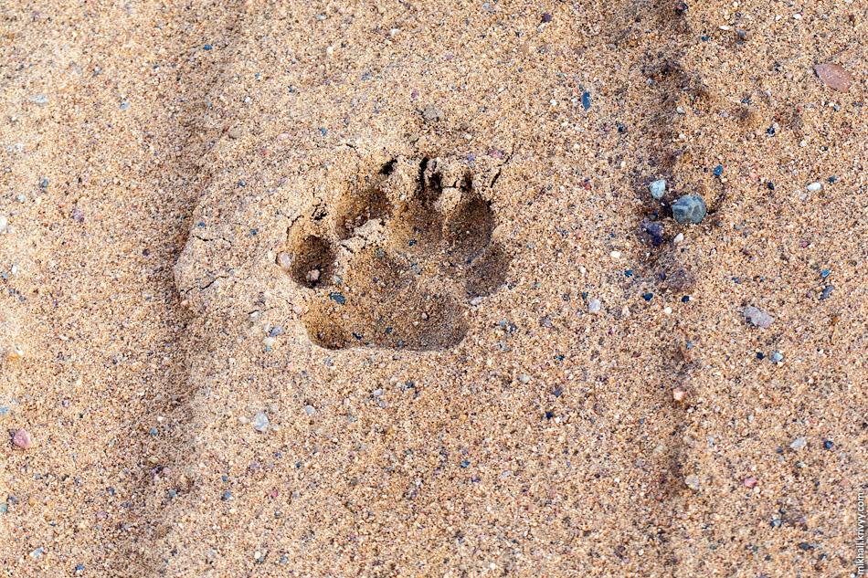 21. Когда видишь свежие медвежьи следы невольно прибавляешь шагу.