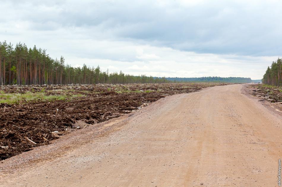 По мере удаления от реки лес постепенно становится ниже и мы выходим к болоту Гажьи Сопки.