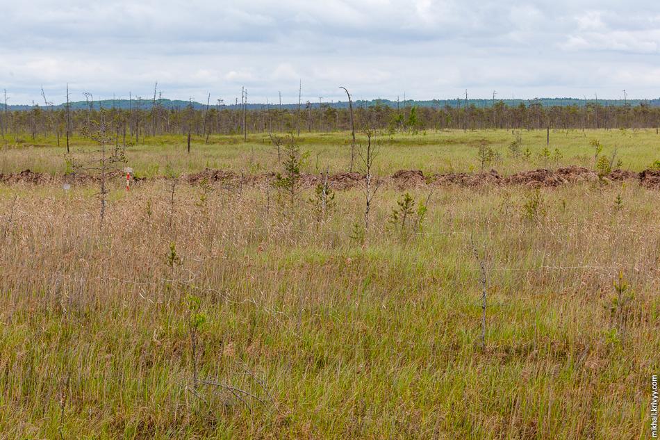 В итоге решили, что дорога пройдет по краю болота Гажьи Сопки. Если присмотреться, то видны тонкие веревки в траве. Таким образом помечали участки при разминировании.