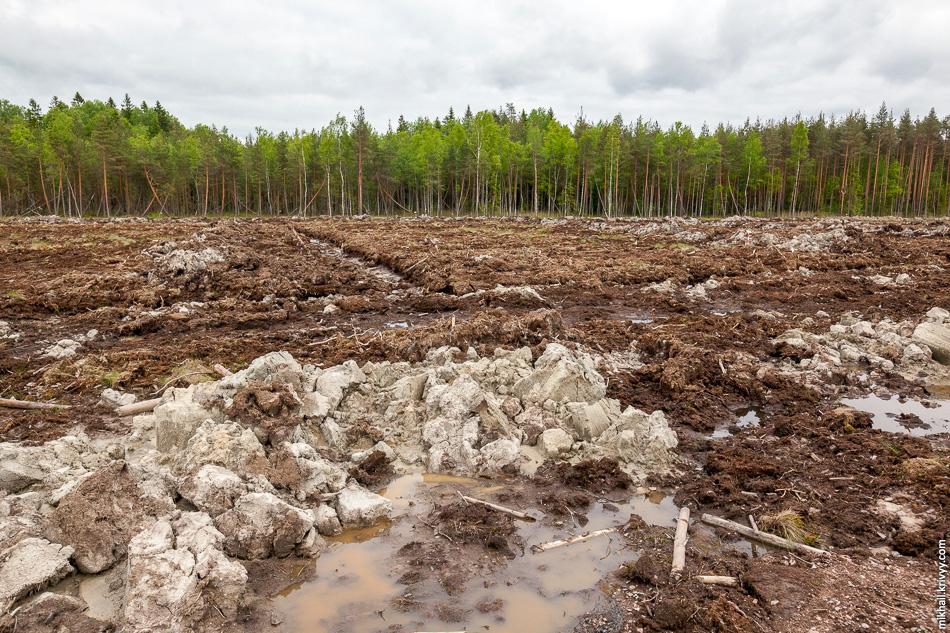 Болото заканчивается, появляется лес и дорога выходит на так называемый «остров». В изобилующей болотами Новгородской области большое количество деревень имеют в названии слово «остров».