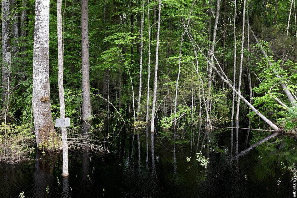 А вот и лес типа «мангровые заросли». Км 556.9.