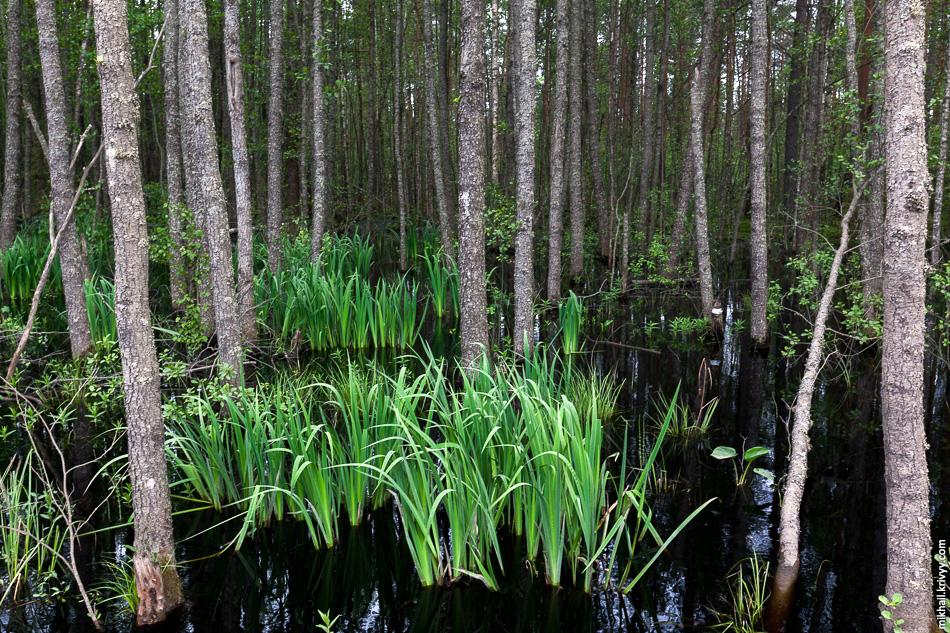 Именно это болото стало западной границей «Долины смерти».