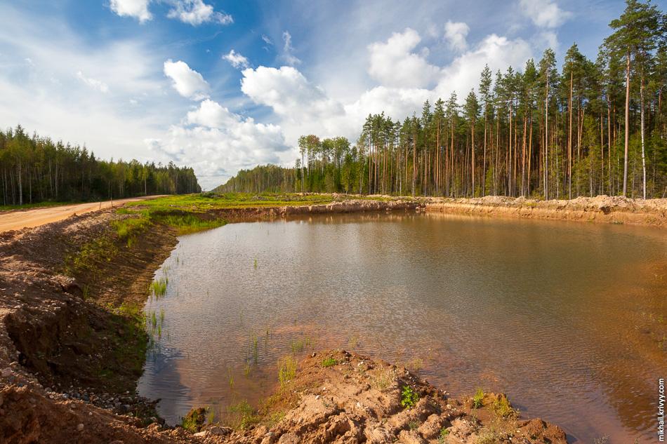 14. Везде вода. В лесу, во всех выемках и ямах. Лето было дождливое, а глинистые почвы хорошо удерживают воду.