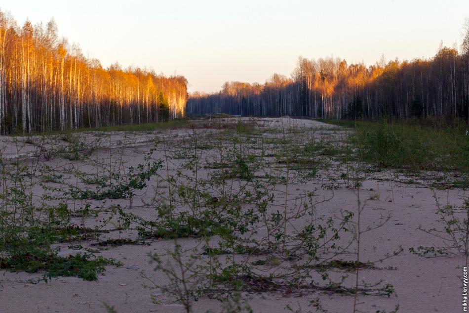 … начинается брошенное основание насыпи. Тут даже трава успела вырасти.