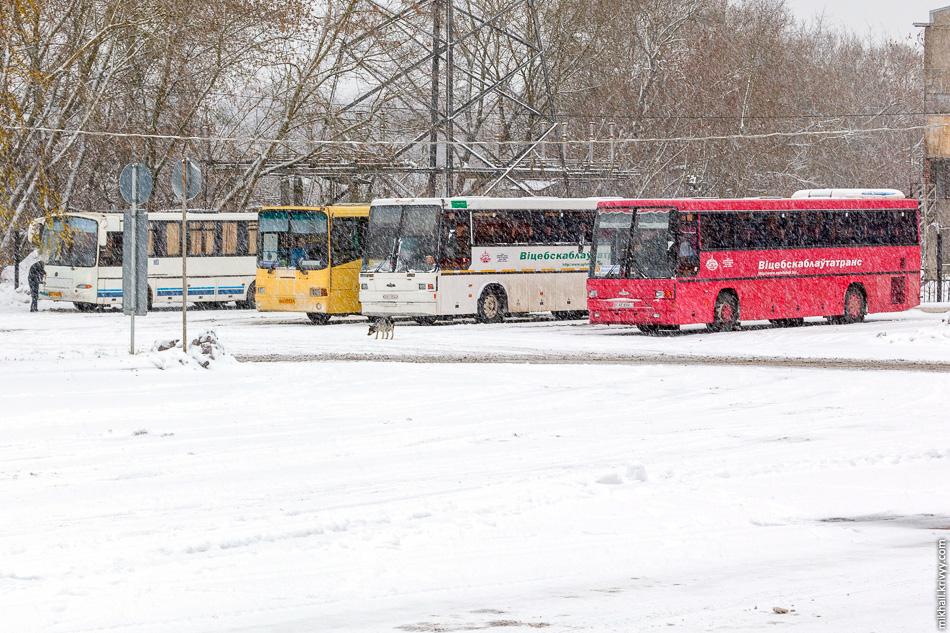 Белорусы стоят немного в стороне. Автобусы у них приличнее. Ходят до Орши, Витебска и Могилева.